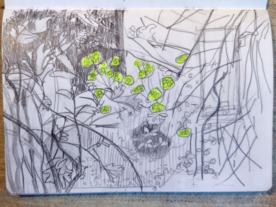 EdinburghGardenSketchbook-9