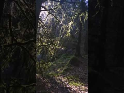 The Faerie Wood