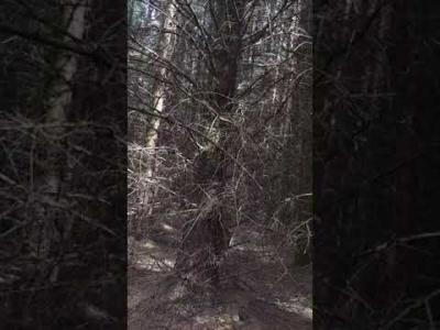 A tree draws itself