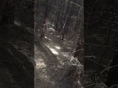 The woods draw themselves